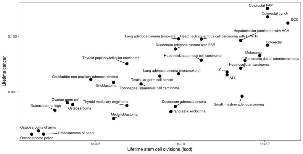 Figur 1 Livstidsrisiko for kreft mot antall stamcelledelinger i vevet.