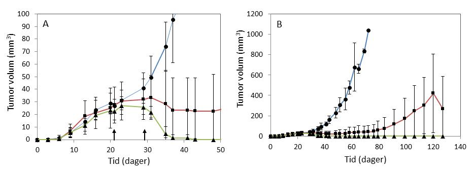 Figur 3: Utvikling i tumorvolum med tid (A viser et utsnitt fra B). Svulster som ikke fikk noen behandling vokste kontinuerlig (blå kurve). I mus som ble behandlet med bobler med cellegift var veksten redusert, og størrelsen på svulstene var stabil over flere uker før de begynte å vokse igjen (rød kurve). Med bruk av ultralyd i tillegg stoppet veksten opp, svulstene forsvant og kom ikke tilbake i løpet av 100 dager etter behandlingen (grønn kurve)2. Behandlingstidspunkt er markert med piler i A, hver gruppe består av 3-4 mus.