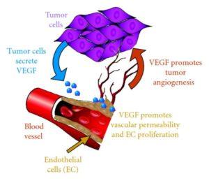 Tumor angiogenese